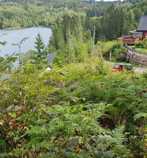 Grunnundersøkelser for nytt renseanlegg  for 5 hytter ved Hagatjern,